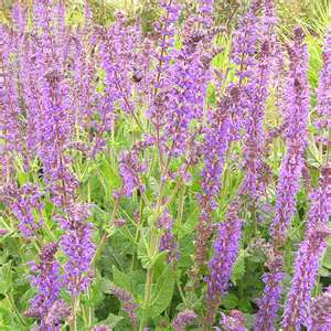 Right Plants Provide Year Round Food Source For