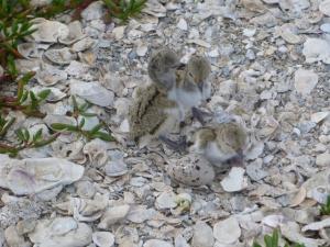 UWGalB121 chicks with egg shell resized